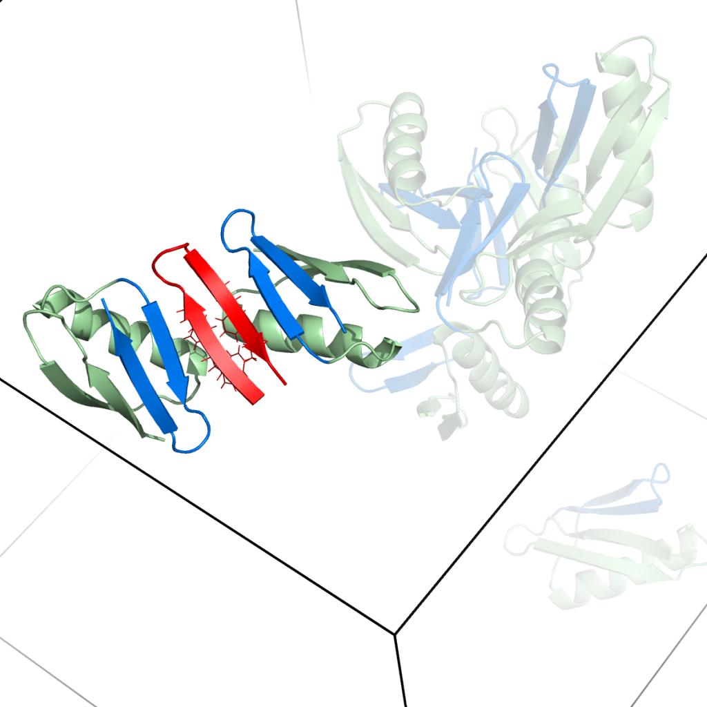 MC-proteins-2